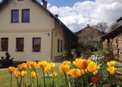 kvetouci zlute tulipany na zahrade pred domem winter apartment
